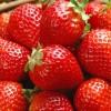 Strawberry menu in «PetruS-ь» restaurant